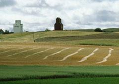 Un campo con una iglesia al fondo.