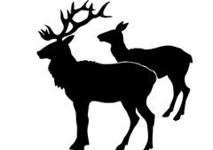 Dos ciervos