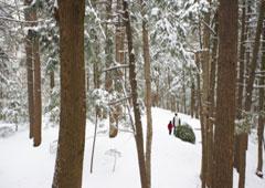 Bosque nevado donde caminan un padre y su hijo